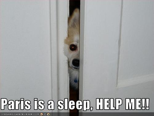 help,paris hilton,sleeping,whatbreed