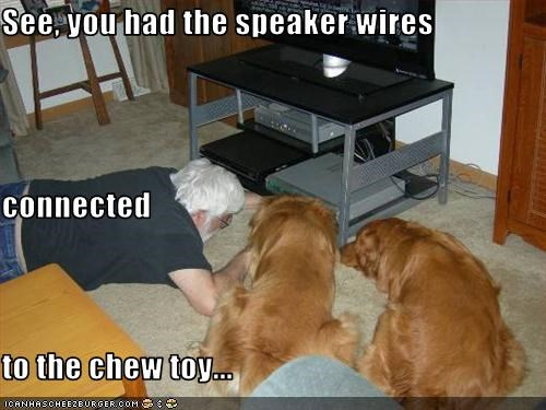 See, you had the speaker wires  connected to the chew toy...