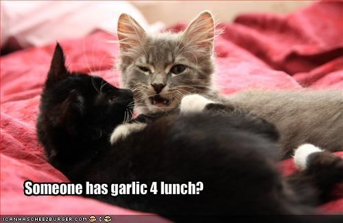 Someone has garlic 4 lunch?
