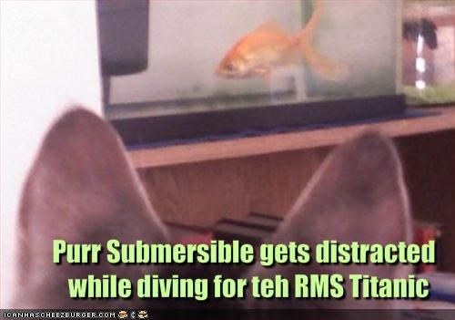 Purr Submersible gets distracted 