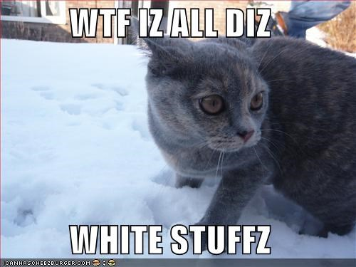 WTF IZ ALL DIZ  WHITE STUFFZ