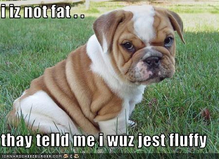 i iz not fat . .   thay telld me i wuz jest fluffy
