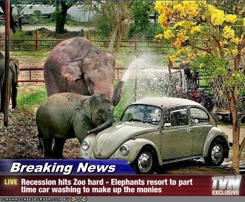 Breaking News - Recession hits Zoo hard - Elephants resort to part time car washing to make up the monies