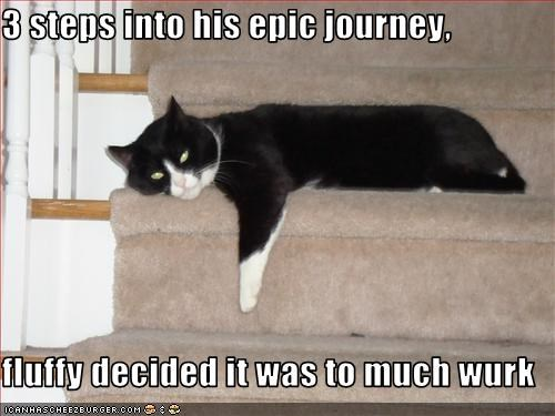3 steps into his epic journey,   fluffy decided it was to much wurk