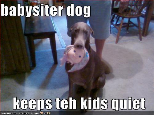 babysitting,doberman pinscher,kitchen,toys