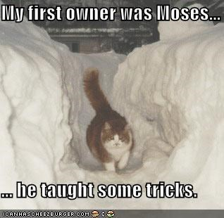 My first owner was Moses...  ... he taught some tricks.