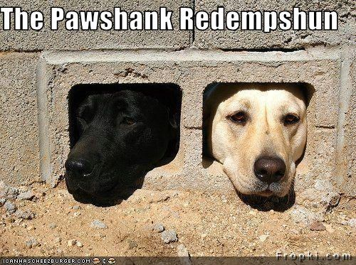 The Pawshank Redempshun