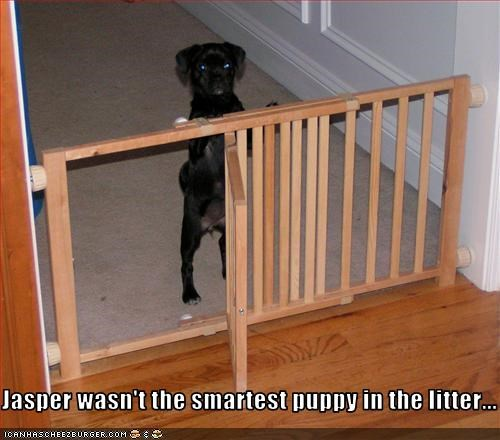 Jasper wasn't the smartest puppy in the litter...