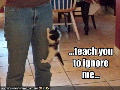 ...teach you to ignore me...