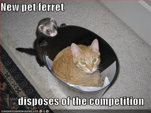 New pet ferret  disposes of the competition