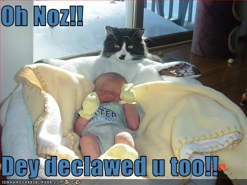 Oh Noz!!  Dey declawed u too!!