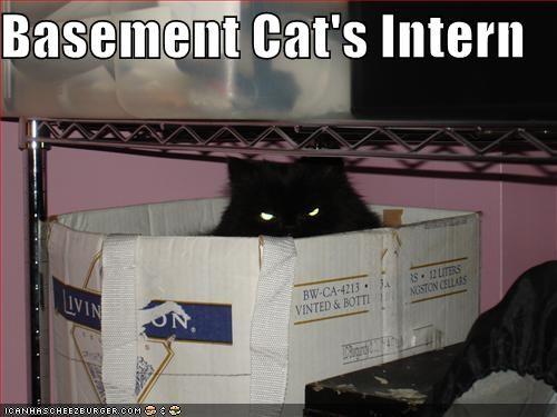 Basement Cat's Intern