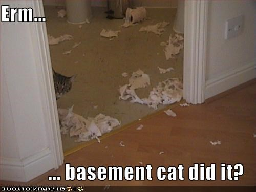 Erm...  ... basement cat did it?