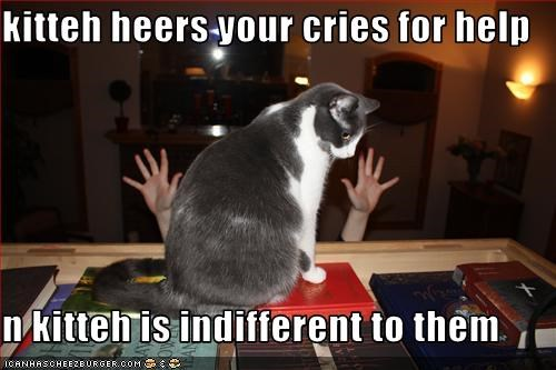 kitteh heers your cries for help  n kitteh is indifferent to them