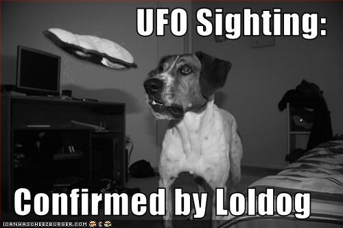 jack russel terrier,loldog,sandwich,ufo
