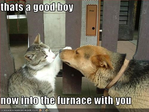 thats a good boy  now into the furnace with you