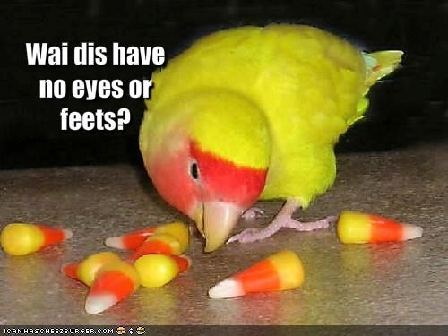 Wai dis have no eyes or feets?