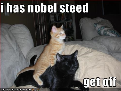 i has nobel steed  get off