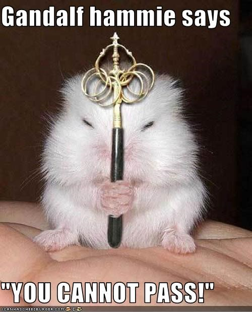 "Gandalf hammie says  ""YOU CANNOT PASS!"""