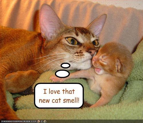 cute,kitten,smell