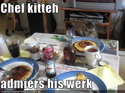 Chef kitteh  admiers his werk