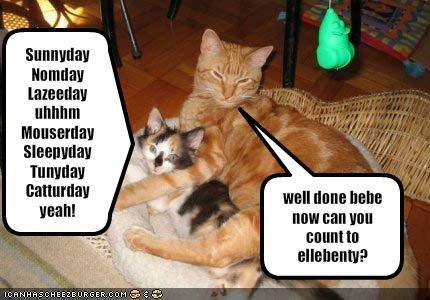 Sunnyday Nomday Lazeeday uhhhmMouserday Sleepyday Tunyday Catturdayyeah!