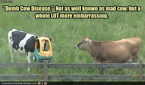 """Dumb Cow Disease.""  Not as well known as mad cow, but a whole LOT more embarrassing."