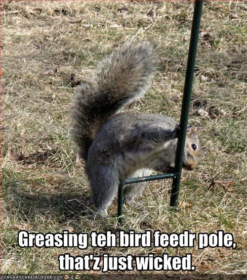 Greasing teh bird feedr pole,