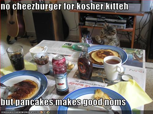 no cheezburger for kosher kitteh  but pancakes makes good noms
