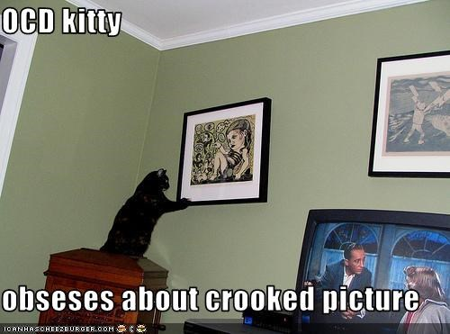 OCD kitty  obseses about crooked picture