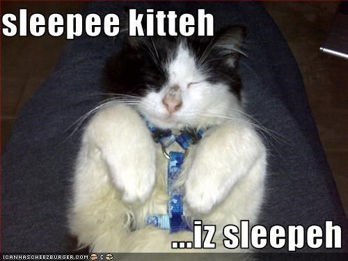 sleepee kitteh                           ...iz sleepeh