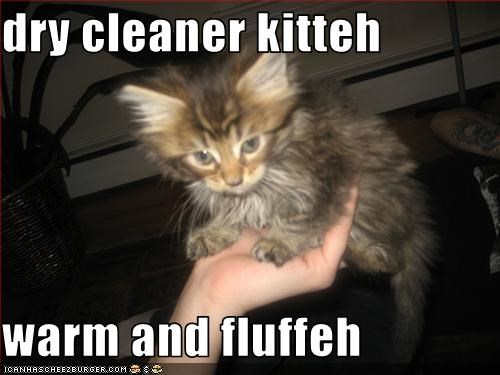 dry cleaner kitteh  warm and fluffeh
