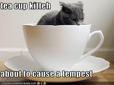 tea cup kitteh  about to cause a tempest