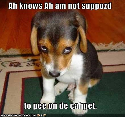 Ah knows Ah am not suppozd   to pee on de cahpet.