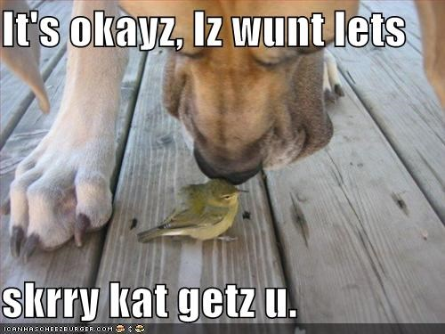 It's okayz, Iz wunt lets  skrry kat getz u.