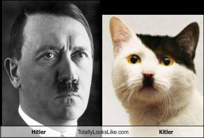 Hitler Totally Looks Like Kitler