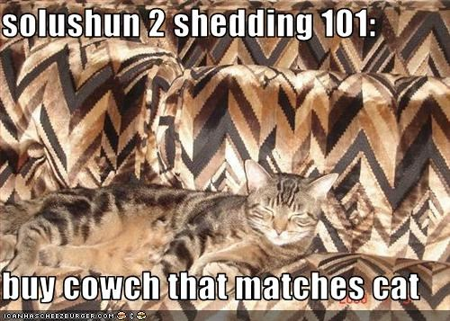 solushun 2 shedding 101:  buy cowch that matches cat