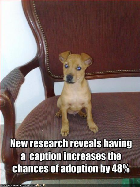 New research reveals having a  caption increases the chances of adoption by 48%