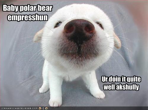 Baby polar bear empresshun