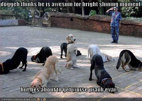 doggeh thinks he is awesum for bright shining moment  but hes about to get worse prank evar.