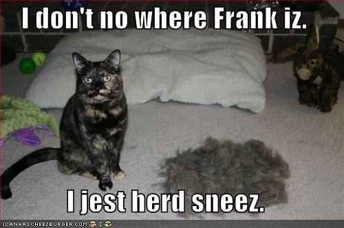I don't no where Frank iz.  I jest herd sneez.