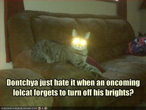 Dontchya just hate it when an oncoming lolcat forgets to turn off his brights?