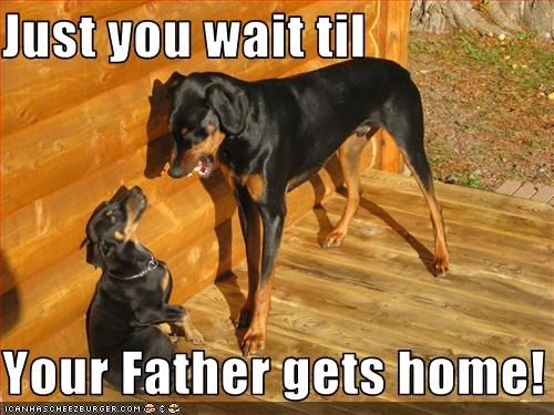 doberman pinscher,Father,mom,outside,yelling