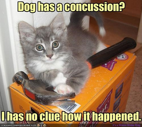 Dog has a concussion?