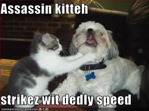Assassin kitteh  strikez wit dedly speed