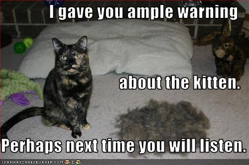I gave you ample warning about the kitten. Perhaps next time you will listen.