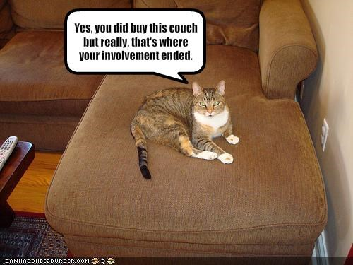 Yes, you did buy this couch but really, that's where your involvement ended.