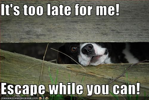 escape,fence,late,outdoors,trapped,whatbreed