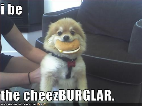 i be  the cheezBURGLAR.