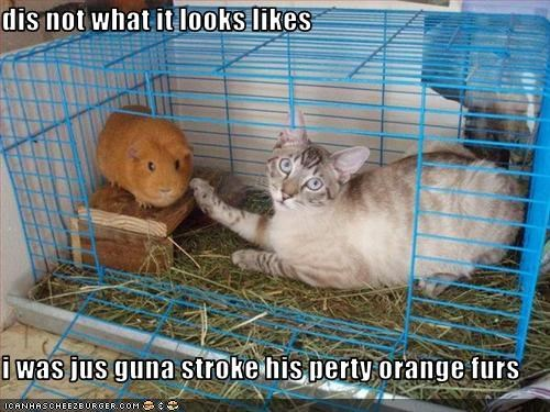 dis not what it looks likes  i was jus guna stroke his perty orange furs